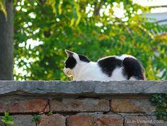chat dans la calle San Lorenzo dans le Castello à Venise