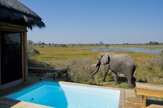 Photographic safari, team building photo safari and wildlife photography course accommodation Vumbura Plaina, Okavango Delta, Botswana. Chobe National Park, Safari Holidays, Okavango Delta, Kilimanjaro, Game Reserve, Biomes, African Safari, Africa Travel, Best Hotels