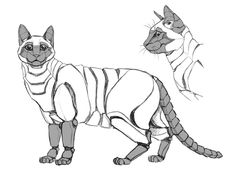 PHYL Cat robot by nutJT on DeviantArt - cyber cat - Gatos Cyberpunk, Cat Character, Character Concept, Steampunk Animals, Robot Animal, Robot Concept Art, Robot Design, Creature Concept, Cat Drawing