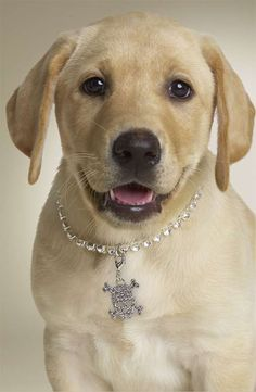 Nordstrom Targets Spoiled Puppies #cutepets #animalphotography