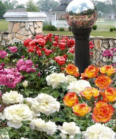 Take a look at this Sub Zero 4-Piece Rose Garden by Cottage Farms Direct on #zulily today!