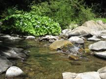 Quiet Pool in the Creek at it's lowest point in late summer - view from your private backyard beach