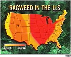 Allergies In The USA US Map Of Ragweed Pollen Seasons Across The - Best place in us for allergies map