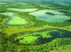 pantanal | Pantanal, Brasil - Mato Grosso,Mato Grosso do Sul,Fauna,Flora,Turismo ...