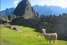 Na tropach Inków - Machu Picchu