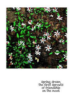 Haiku, Google Drive, Picsart, Competition, Japan, Illustration, Plants, Self, Illustrations