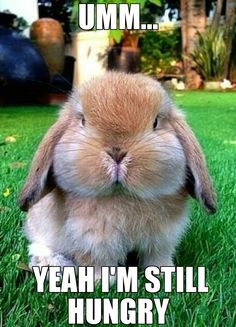Adorable Animals: Look at this cute bunny! Funny Bunnies, Cute Bunny, Bunny Bunny, Bunny Face, Bunny Rabbits, Funny Pets, Adorable Bunnies, Lop Eared Bunny, Big Bunny