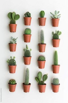 Water cactus when dry, NOT BONE DRY! That's a very quick way to kill a cactus. When the cactus is allowed to become bone dry, the small. Cactus House Plants, House Plants Decor, Cactus Terrarium, Plant Decor, Cactus Cactus, Cactus Planters, Small Cactus Plants, Mini Cactus Garden, Cactus Names