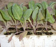 Cominciare un orto in settembre o ottobre. Progetto su 30 mq dell'orto…