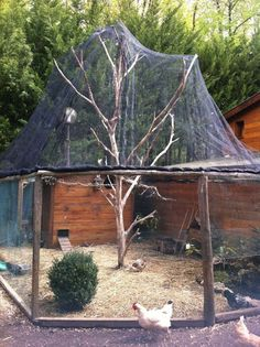 Let's make the second coop around the other tree Hacer Gallinero Casero de Madera Portable Chicken Coop, Backyard Chicken Coops, Chicken Coop Plans, Building A Chicken Coop, Diy Chicken Coop, Chickens Backyard, Chicken Ideas, Chicken Recipes, Chicken Barn