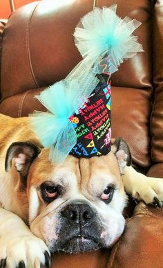 Contact us for Doggie Bag Cafe, Dog Birthday Cakes, Organic Gourmet Dog Food and Bakery Treats We Cater to Your Pet's Desire! Dog Birthday, Birthday Cake, Birthday Parties, Doggie Bag, Dog Boutique, Dog Food Recipes, Your Pet, French Bulldog, Pets