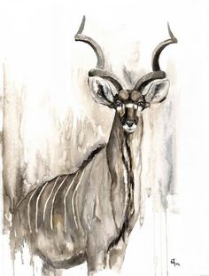 """Aware"" - watercolor - wildlife art - kudu antilope - annikafunke.de"