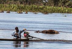 Un Mundo en Paz: Latinoamérica aplica el peso de la ley contra el c...
