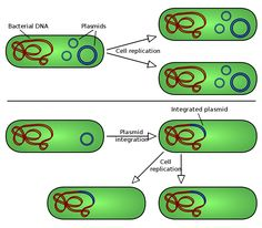 Role of Plasmids in Microbiology