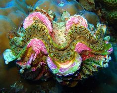 Clam found in the Pacific Ocean
