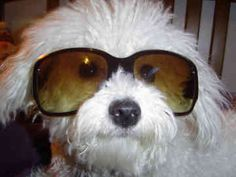 CUTE!! Makes me miss Macy, but maybe some day when im old I can have another bichon.