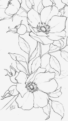 Flower Line Drawings, Pencil Drawings, Art Drawings, Floral Drawing, Floral Watercolor, Watercolor Paintings, Face Paintings, Alpine Plants, Georges Braque
