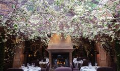Clos Maggiore, literally ridiculously romantic it hurts my eyes I love it let's go