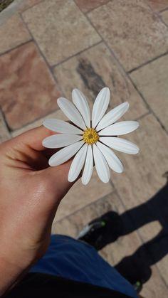 #flower #spring #blanco