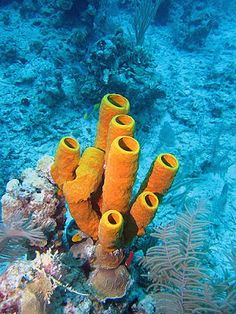 Creative Construction: How to make Tube Coral