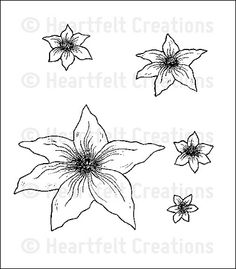 Malabar Clematis PreCut Set: click to enlarge