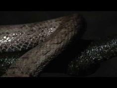 Ecología de Cuevas: parte 1