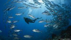 Surfar, velejar, nadar, passear pelas praias: claro, os seres humanos adoram os mares – além de precisarem deles para sobreviver. Apesar disso, tratam da pior forma possível essas extensões de água que cobrem mais da metade do planeta. A DW dá uma olhada de perto nas cinco maiores ameaças de...