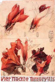 Horst Janssen - the Best of Artists EVER - Amarillys Flowers Mehr Botanical Drawings, Botanical Art, Horst Janssen, Cool Paintings, Gravure, Art Sketchbook, Moleskine, Garden Art, Flower Art