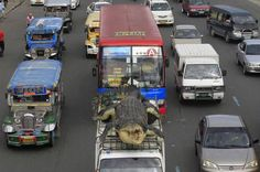 """Romeo Ranoco // A crocodile robot """"Longlong"""" is strapped on top of a van as it is transported through the main road to Crocodile Park in Pasay city, metro Manila, July 5 Fuel Truck, Saltwater Crocodile, Strange Photos, Unusual Things, Weird Pictures, Southeast Asia, Cool Photos, Transportation, Ocean"""