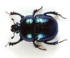 scarabee quebec                                                                                                                                                                                 Plus