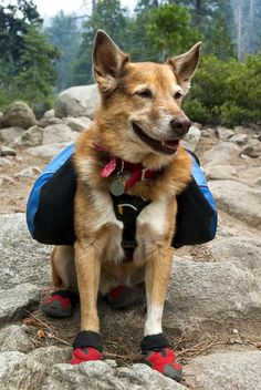 """Should you bring the family dog on a day hike with kids? Read more tips for day hiking with children in """"Hikes with Tykes: A Practical Guide to Day Hiking with Kids."""""""