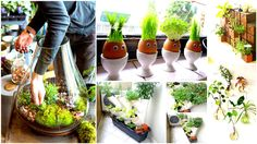 Creative Ideas25+ Smart Miniaturized Indoor Garden Projects That You Would Really Love - Creative Ideas