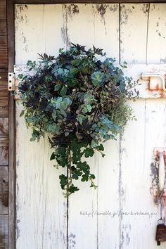 アンゲロニアの寄せ植えの画像 | フローラのガーデニング・園芸作業日記