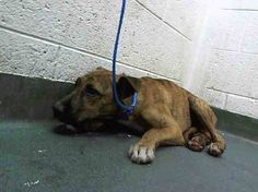 Betrayed puppy is terrified in Florida animal control
