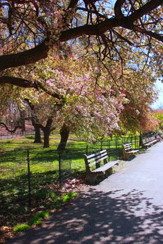 Riverside Park in NYC. We used to live closer to Central Park, now we live a block from here...