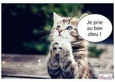 """Résultat de recherche d'images pour """"Petitchat"""""""