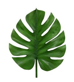 What fun that decoration branches of HK Living! So you always have green in your home and you can also just really forgot to water the plants. Decoration Branches, Branch Decor, Leaf Template, Flower Template, Snake Plant, Leaf Art, Paper Flowers, Stencils, Plant Leaves