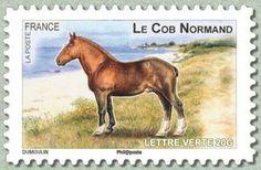 Norman Cob (Equus ferus caballus)