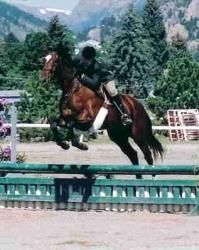 Colorado Aspen is an adoptable Thoroughbred Horse in Colorado Springs, CO. SPECIAL NEEDS!!!  Aspen. She is a 1998 mare, trained english with basic dressage and jumping. PHR Registered. 16.2HH. Dark B...