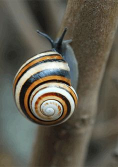 beautifully colored shell...