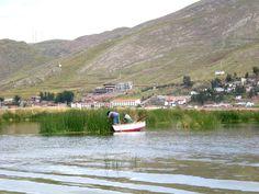 Extrayendo totoras en el Lago Titicaca proximo a las islas de los uros.