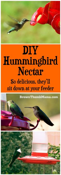 You can make hummingbird nectar with two items you already have in your kitchen. Plus important tips on what you should NEVER feed to hummers! by elba Diy Garden, Lawn And Garden, Garden Projects, Garden Ideas, Upcycled Garden, Garden Whimsy, Garden Junk, Outdoor Projects, Make Hummingbird Food