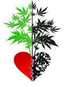 "Too much ""love"" can cause more harm than good in a #medicalmarijuana #garden."