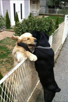 Ruuuffles! Booowzer! {hahaa}~~ friends - dogs hugging