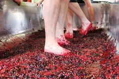 St Austell launches Flemish style kriek beer - here's the Cornish cherries being mashed St Austell Brewery, British Beer, Cherries, Cornwall, At Least, Product Launch, Marketing, Fruit, Flower