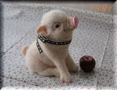 Image result for animales graciosos y tiernos