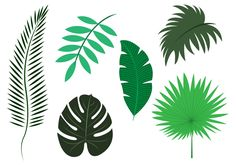 Different types and species of palm leaves - palm leaves designs for Palm Sundaes