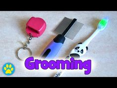 Grooming Long Haired Syrian Hamsters - YouTube