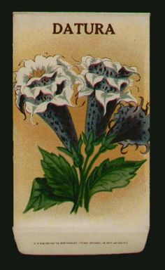 Stock, DATURA, Antique Seed Packet