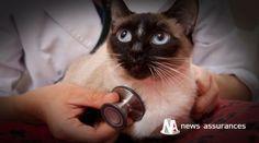 Choc avec un véhicule, chute, blessure… les accidents, dont les frais vétérinaires qu'ils occasionnent sont pris en charge par l'assurance santé animale, c. Actualités de News Assurances.